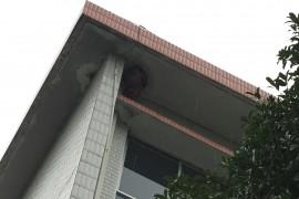 """校园内出现大""""毒瘤"""",三角洲救援小黄人闻讯出击!"""